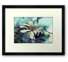 Magnolia's Beauty - A Spring Offering Framed Print