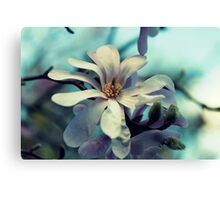 Magnolia's Beauty - A Spring Offering Canvas Print
