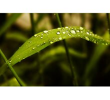 Dew on the Blade Photographic Print