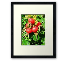 Fruit of the Bloom Framed Print