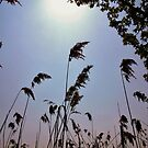 Sway in the Noon-day Sun by Susie Hawkins
