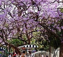 'Jacarandas' in Chapultepec Park by Shirley  Poll