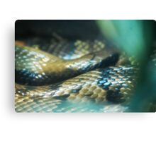 Snakey Scales Canvas Print