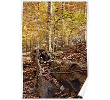 Fallen Tree Trunk Poster