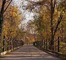 Middle of a Bridge in the Fall by KateCraig