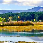 Cowichan Bay Estuary by Daphne Eze
