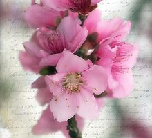 Peach Blossom Time by Bonnie T.  Barry