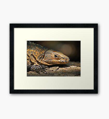 Iguana reptile Framed Print