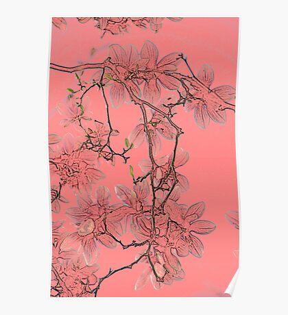 Magnolia Blossom in Colored Pencil Poster