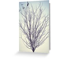Empty Branches Greeting Card