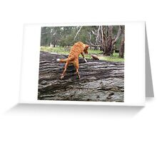 Toller Puppy Retrieves Greeting Card