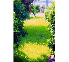 Bunny on a sunny yard Photographic Print