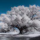 Lonely Tree by Marzena Grabczynska Lorenc