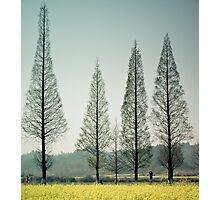 Four Trees Photographic Print