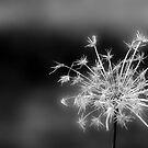 Magic in the Air by Annie Muell