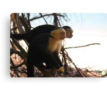 Angry monkey Canvas Print
