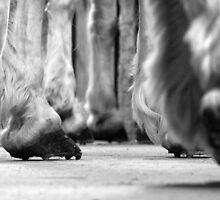 Caisson Horses by Richard Ruddle