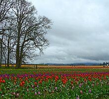 Wooden Shoe Tulip Farm Landscape by Nick Boren