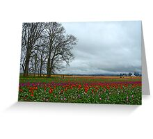 Wooden Shoe Tulip Farm Landscape Greeting Card
