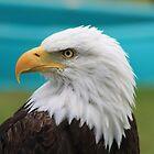 "Bald Eagle - ""Jefferson"" by Alyce Taylor"