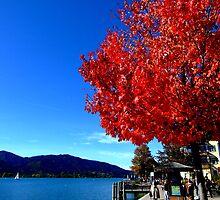 Red Tree Lake Tegernsee by Daidalos