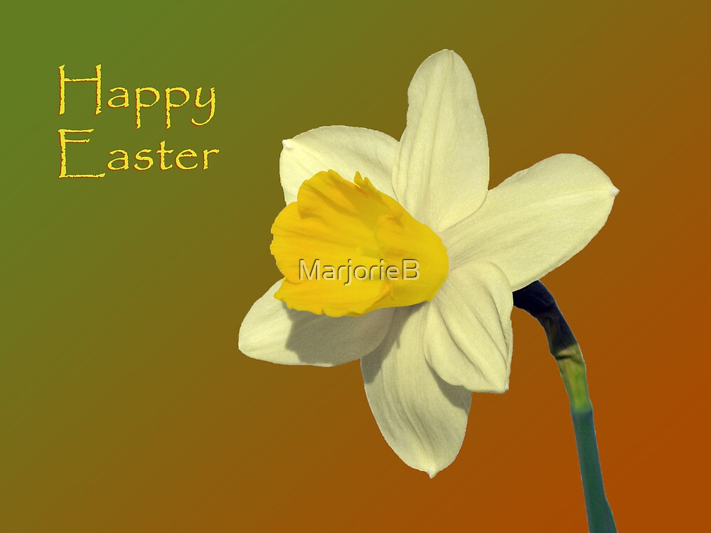 Daffodil Solo for Easter Morning by MarjorieB