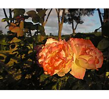 Tuscan Roses Photographic Print