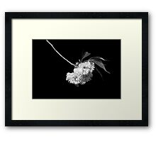 Japanese Cherry Tree Blooms Framed Print