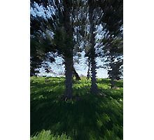 Extruded Trees Photographic Print