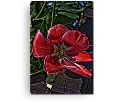 tulip in hdr Canvas Print