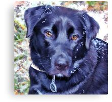 """""""Rocky in Snow"""" Canvas Print"""