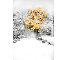 Wind Gust after the snow on a Fall Day Photographic Print