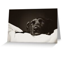 Staffie Watch Greeting Card