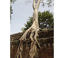 Cambodia. Angkor Wat , Siem Reap 50 Photographic Print
