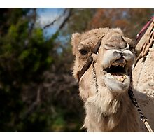 Camel Calling, Camel Farm, Outback NSW Photographic Print
