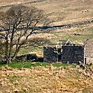 Dentdale Ruin - Cumbria by Trevor Kersley