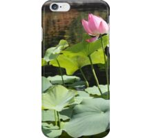 Water Lily Zen  iPhone Case/Skin