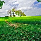 Green fields and trees in France by Marita Toftgard
