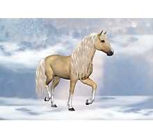 Dream Horse Photographic Print