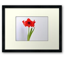 Red Amaryllis Flower #01 Framed Print
