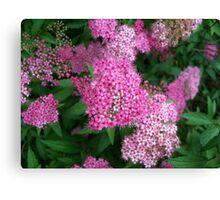 Pink Sprinkles Canvas Print