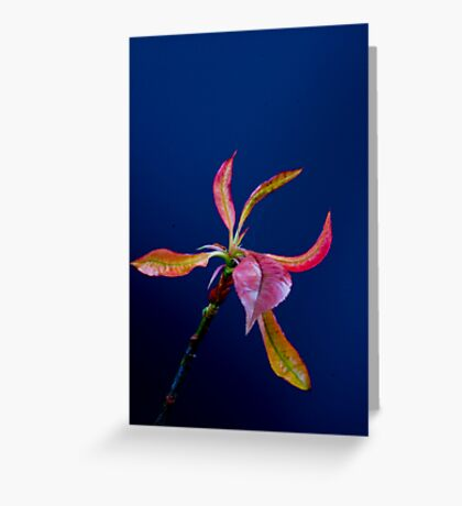 Coloured leaves Greeting Card