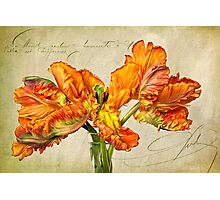 Fiery Floral  Photographic Print
