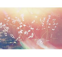 Cherry Blossom Canvas Photographic Print