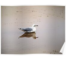 Bird in Reflection Poster