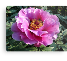 Blooming perfectly... Metal Print