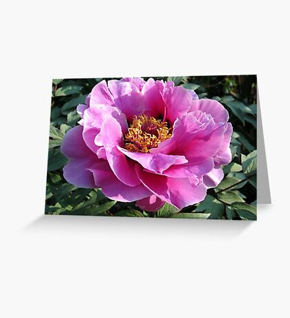Blooming perfectly... Greeting Card