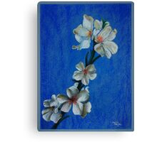 White Blossoms Canvas Print