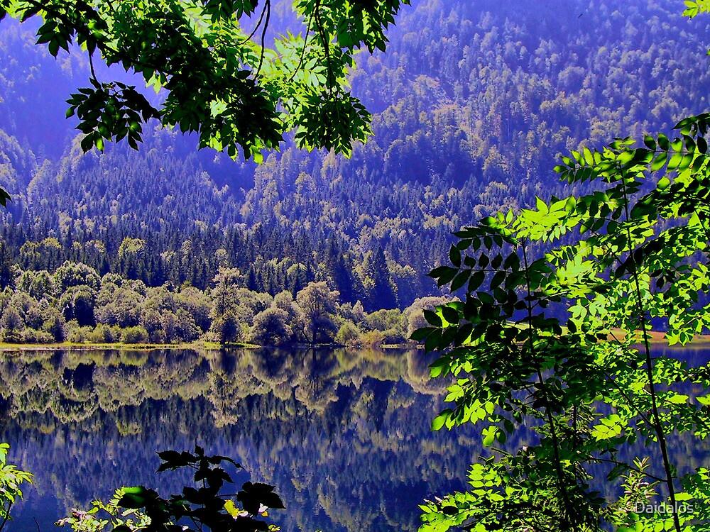 Reflective Wood by Daidalos