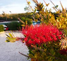 Bottle Brush by Fay Hartwell